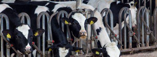 Główne rodzaje pasz dla bydła mięsnego