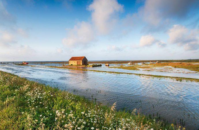 Straty wody przy podlewaniu ogrodu – czy można ich uniknąć?